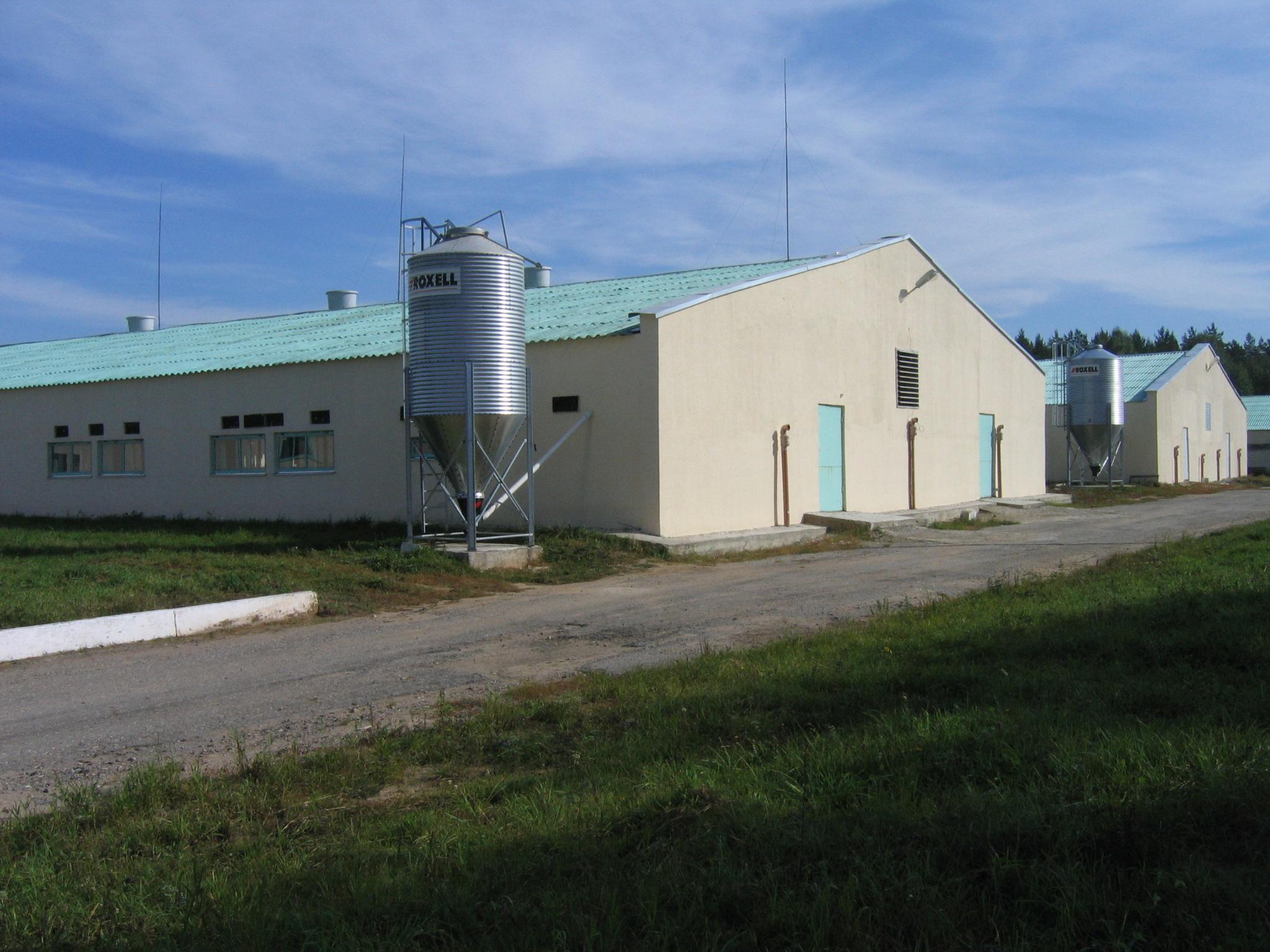 Синокомплекс Борисовский, реконструкция отделения для доращивания и откорма свиней. Система навозоудаления, система кормления свиней, система вентиляции и обогрева свиней.