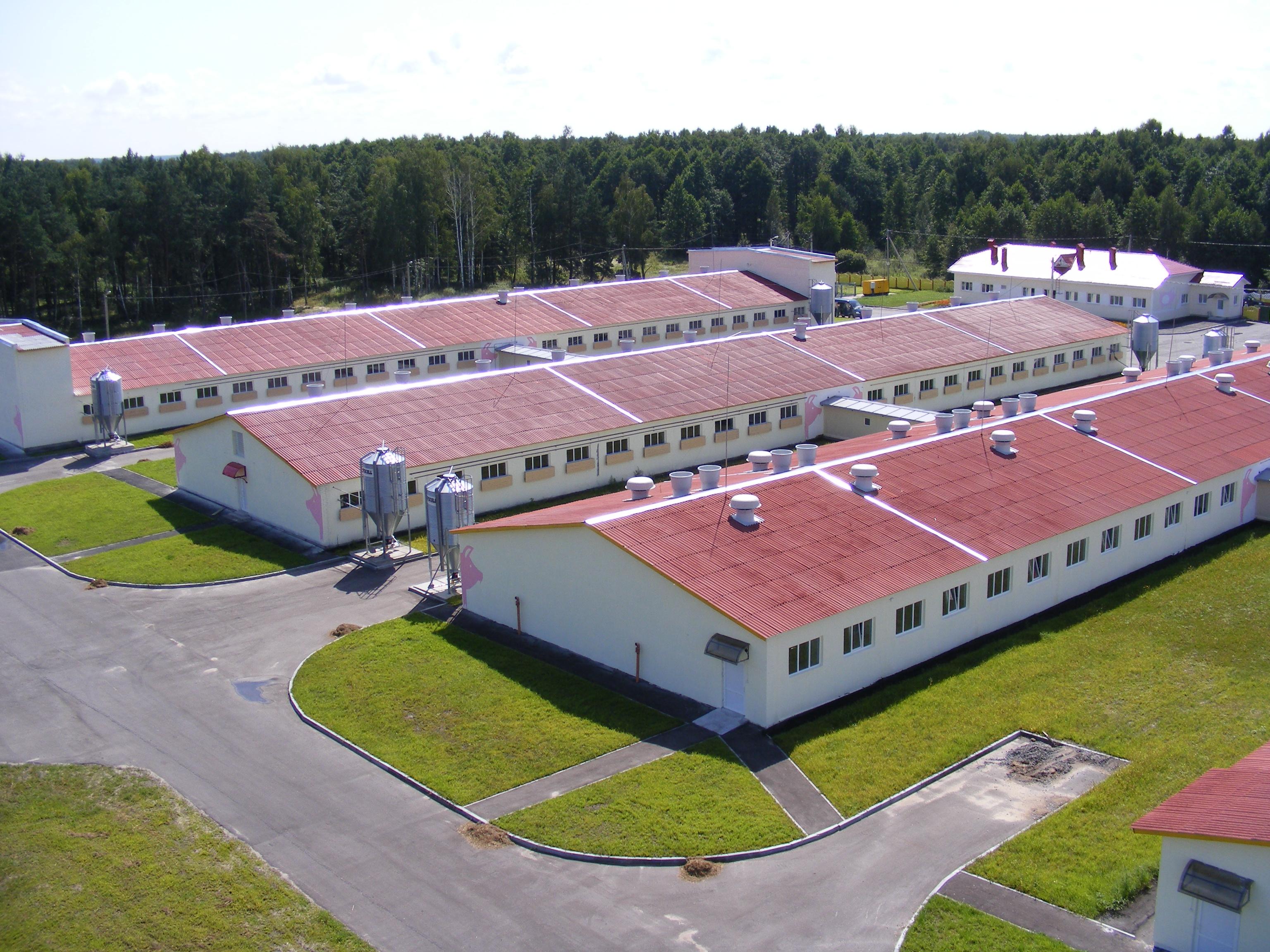 Селекционно-гибридный центр Мышанка, проектирование и оснащение свиноводческого комплекса под ключ