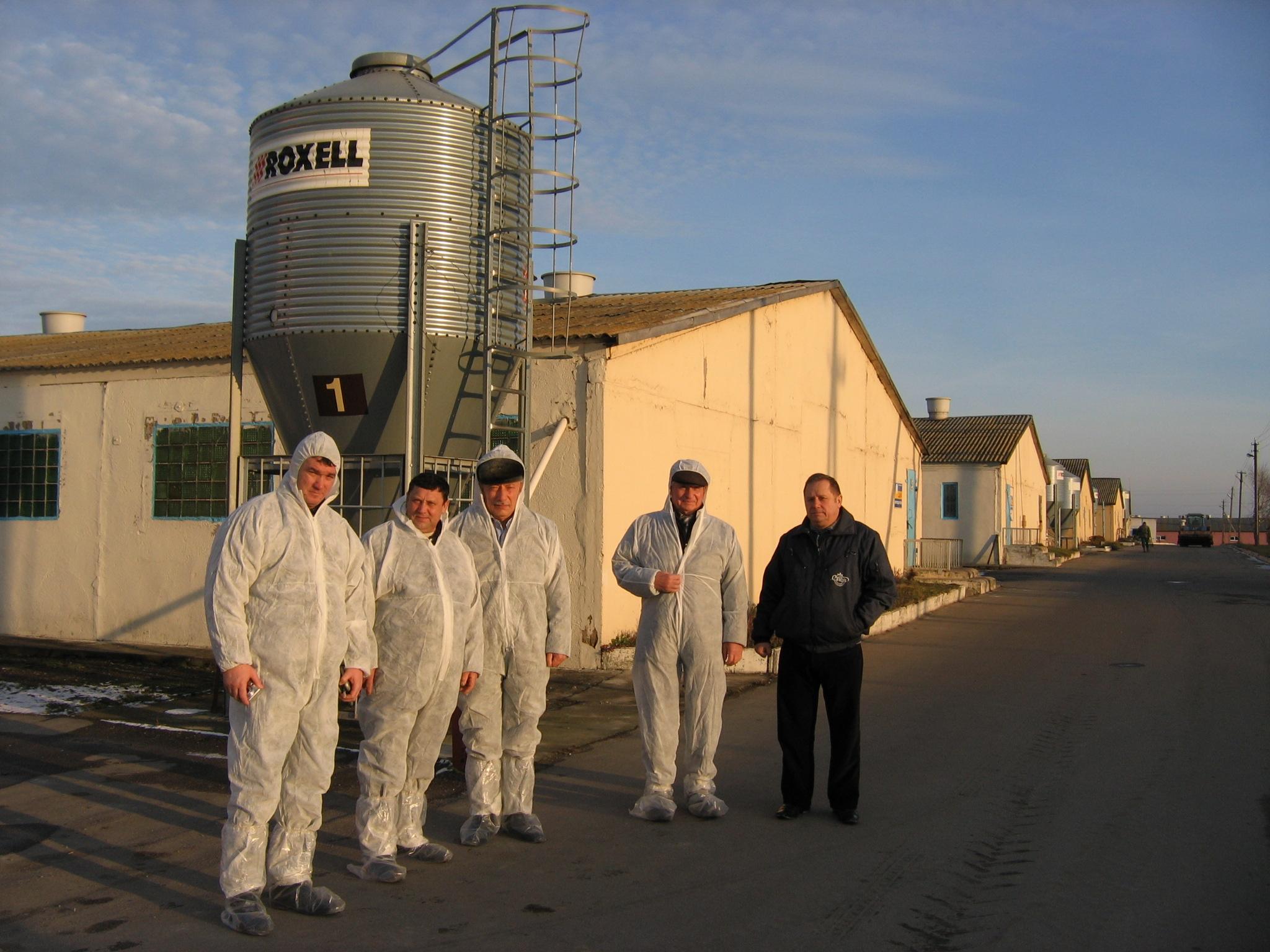 Агрокомбинат Снов, модернизация помещений для доращивания поросят, откорма свиней, содержания подсосных свиноматок